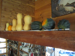 mache, winter squash, cutworm 041