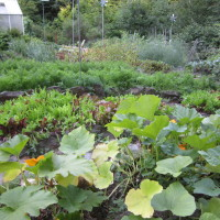 Extra Benefits from Gardening
